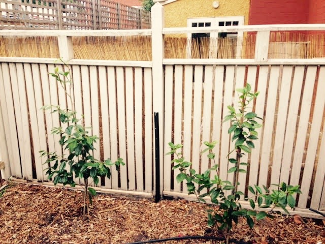 elsternwick fence after - City Handyman Melbourne