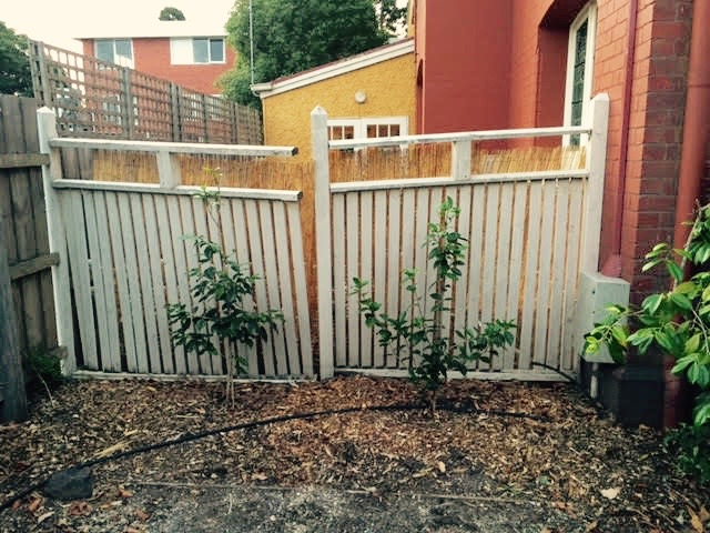 elsternwick fence before